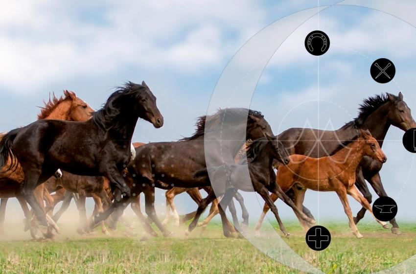 Mustad horses